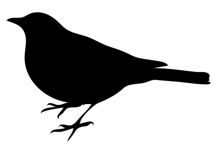 Un ave en mi recámara